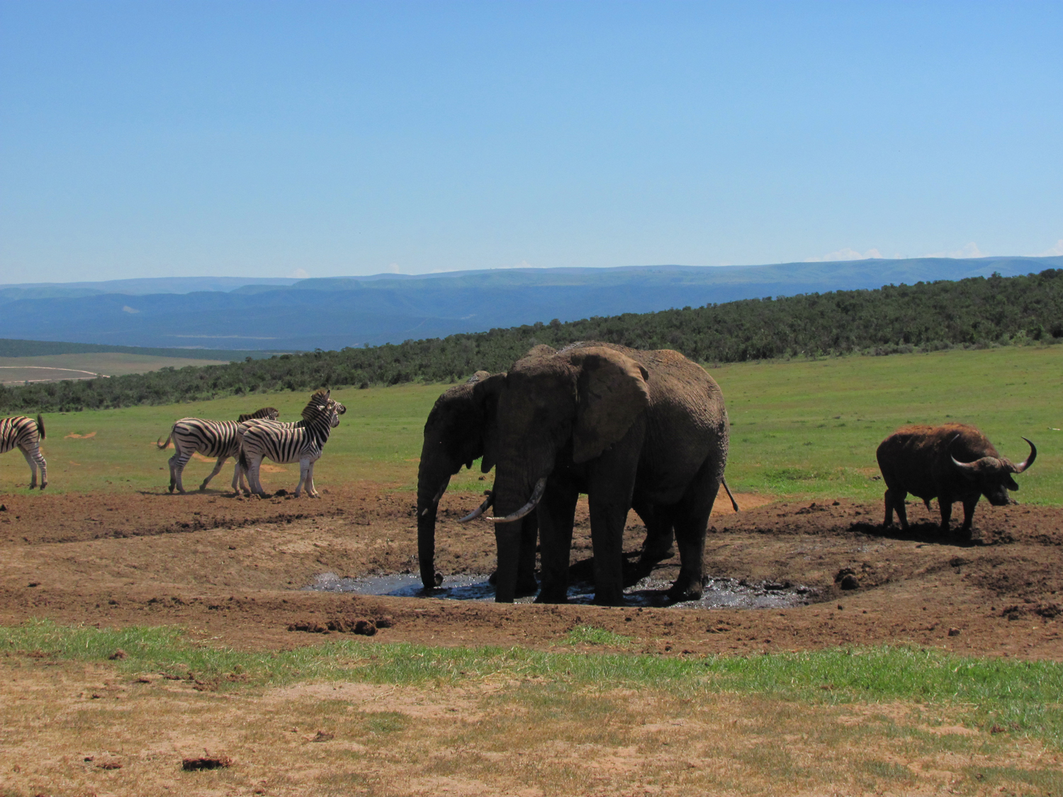 Addo-Elephant-National-Park-Exclusive-Tours-Elephants-Zebras-Waterhole