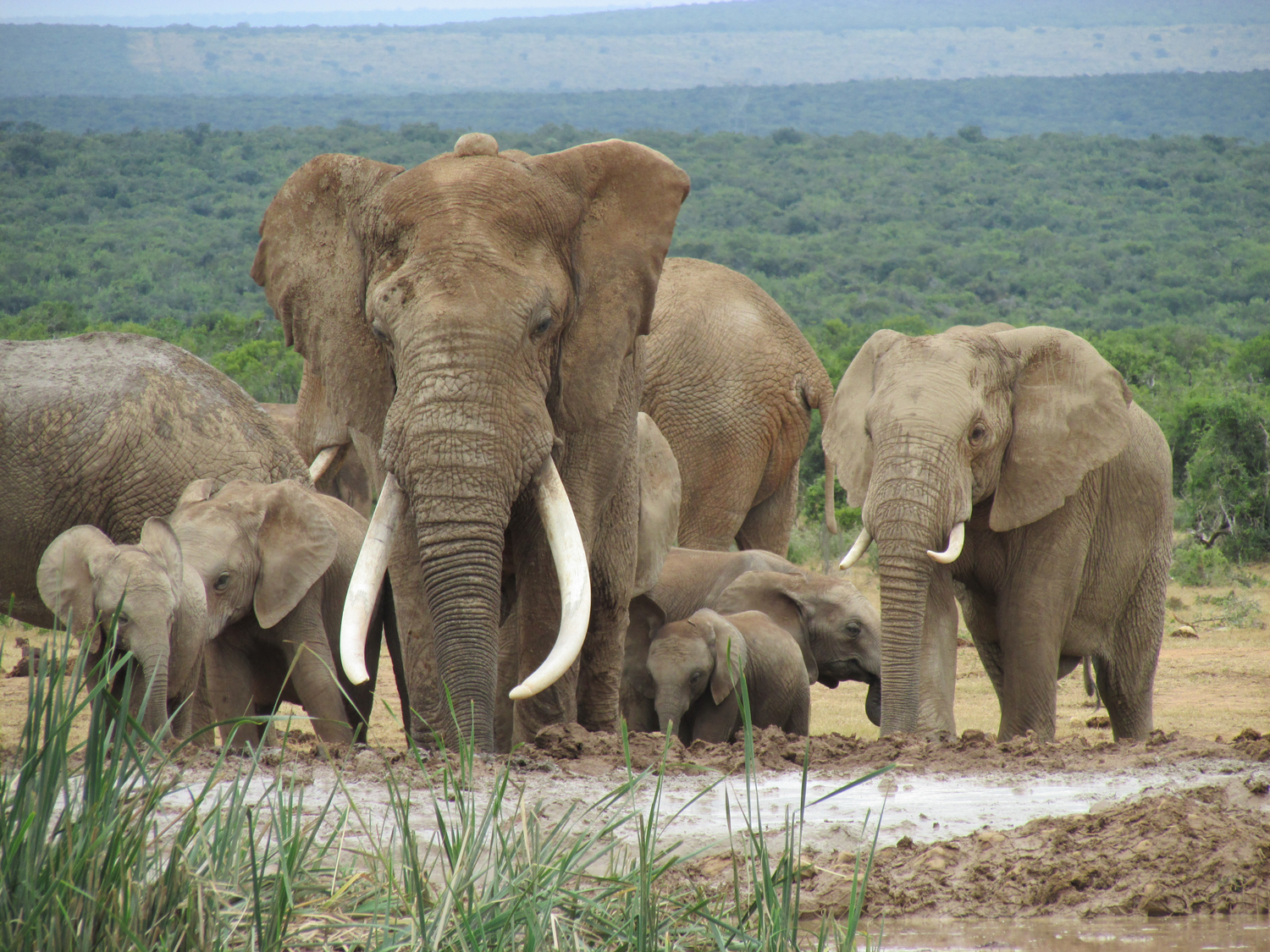 Addo-Elephant-National-Park-Exclusive-Tours-elephants-close-up-1